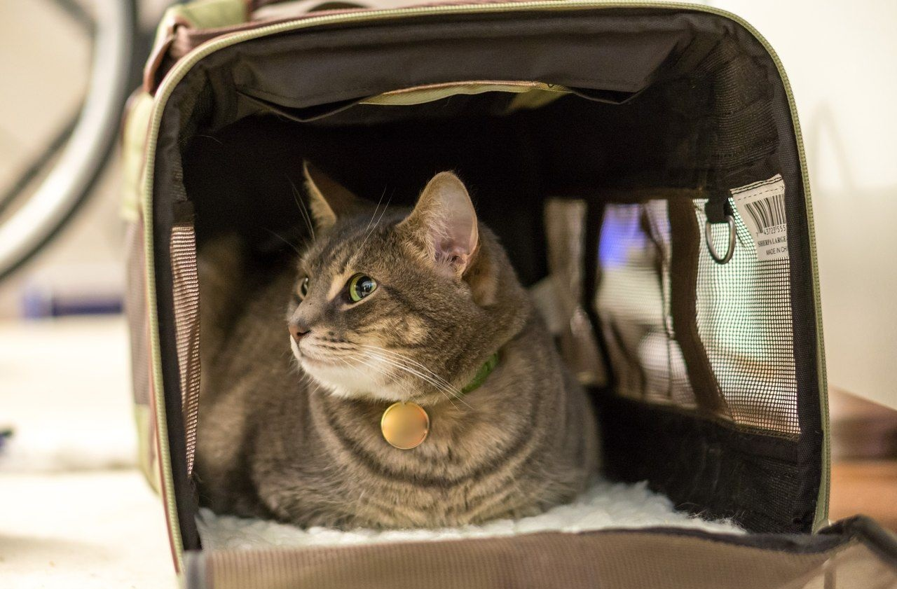 Важный груз – как правильно и безопасно перевозить животных в машине